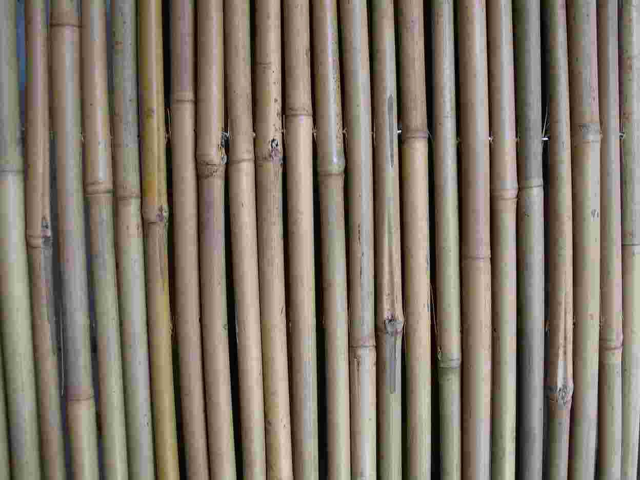 You are not authorized to view this page for Where to buy bamboo sticks for crafts